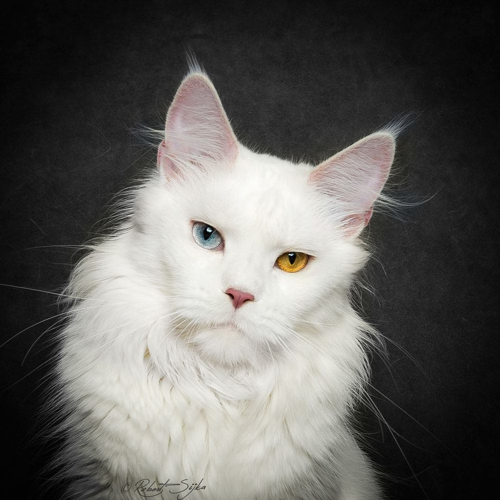 These 10 Cats Are Perhaps The Most Majestic Creatures