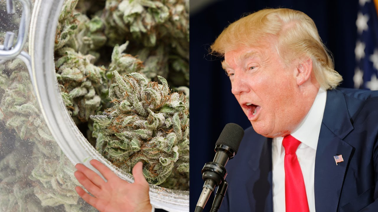 Why The Cannabis Industry Will Keep Growing Under Trump