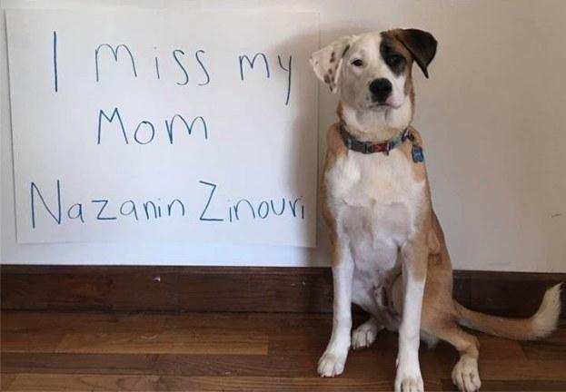 Travel Ban Dog Reunion