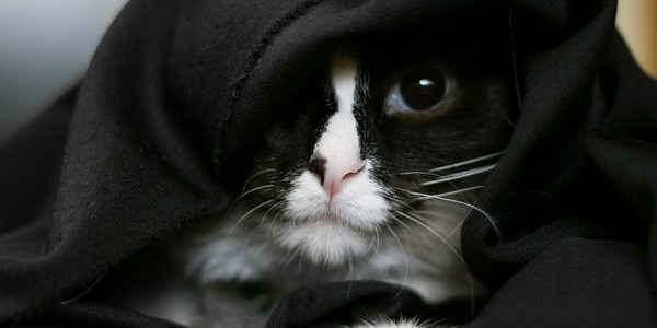This Sith lord