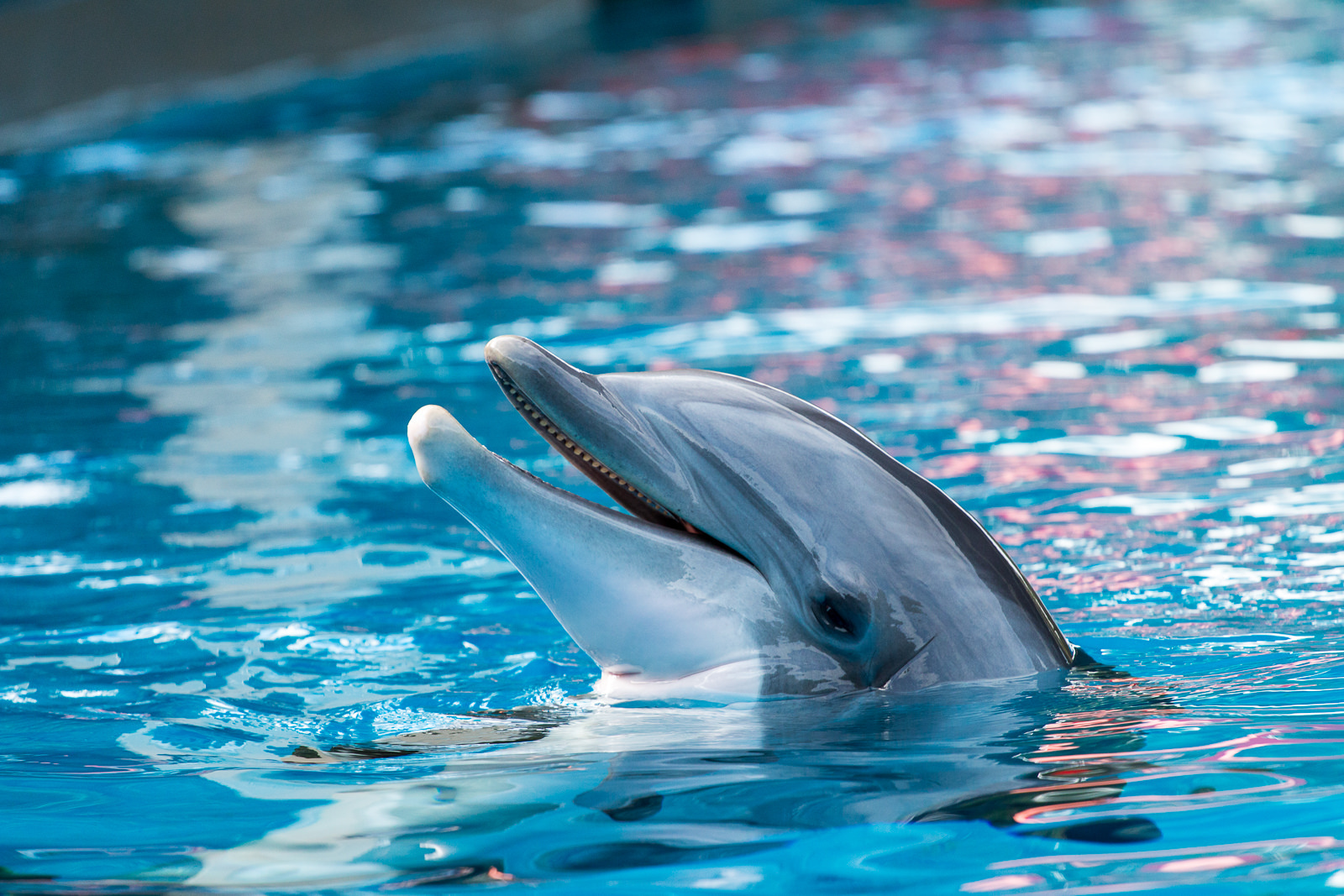 Meet The Scientist Who Used LSD To Learn Dolphin Language