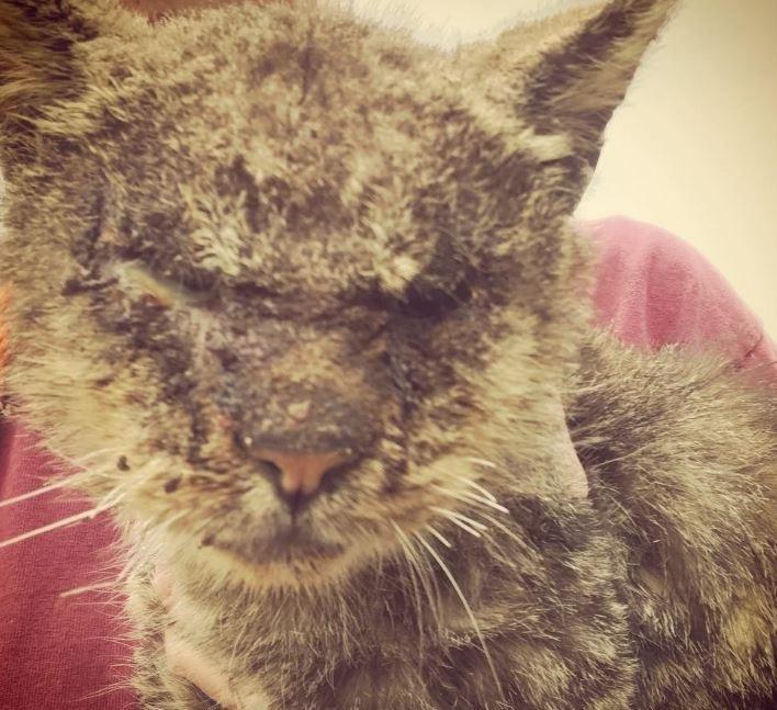 Cat with mange