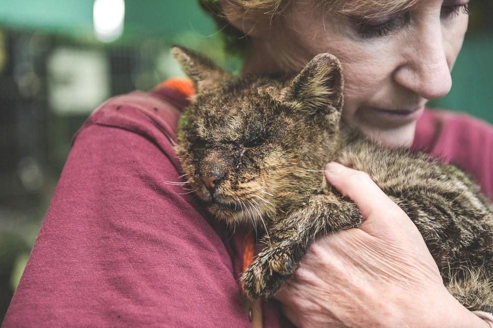 Cat with mange gets hug