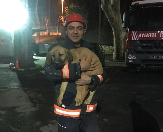 Puppy Trapped 200 Feet Underground Had No Idea He'd Make It Out Alive