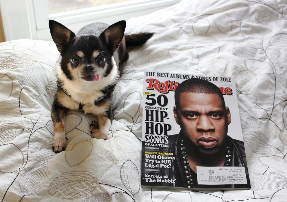 chihuahua in bed beside Jay-Z magazine cover