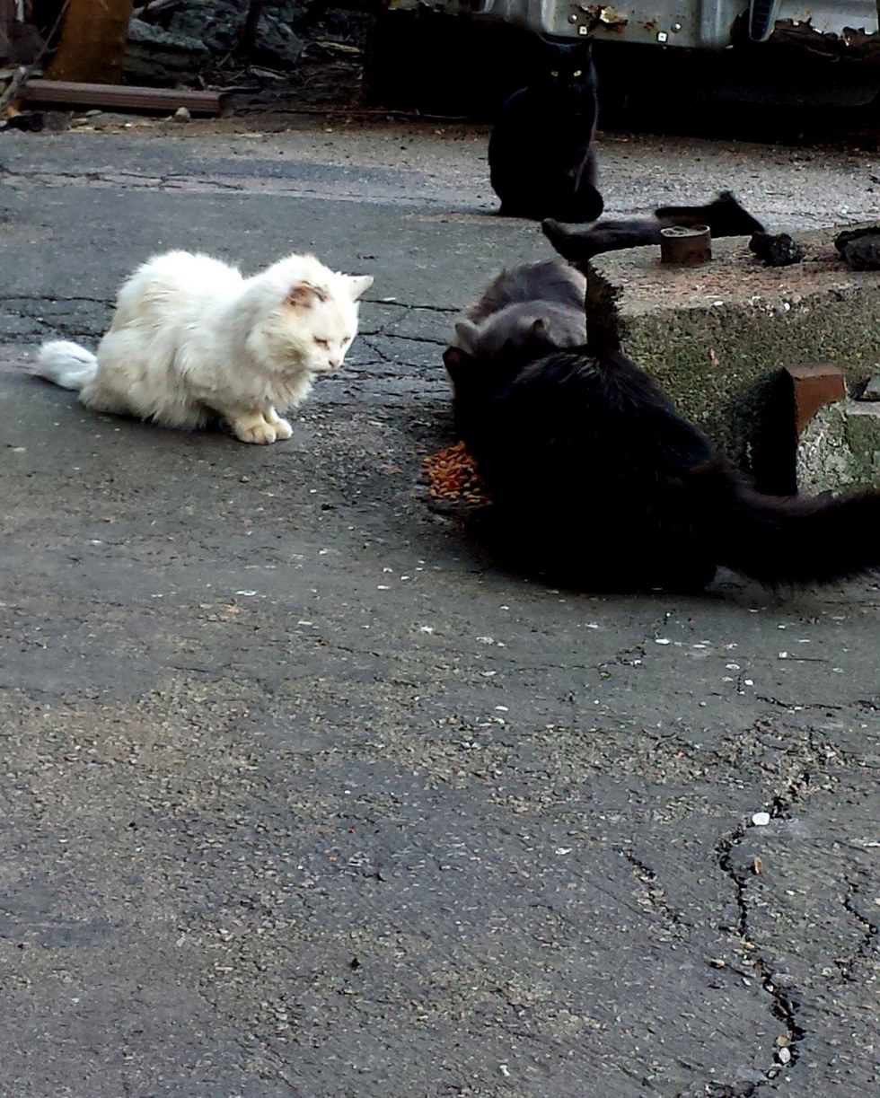Stray cats eating food left for them in Boston