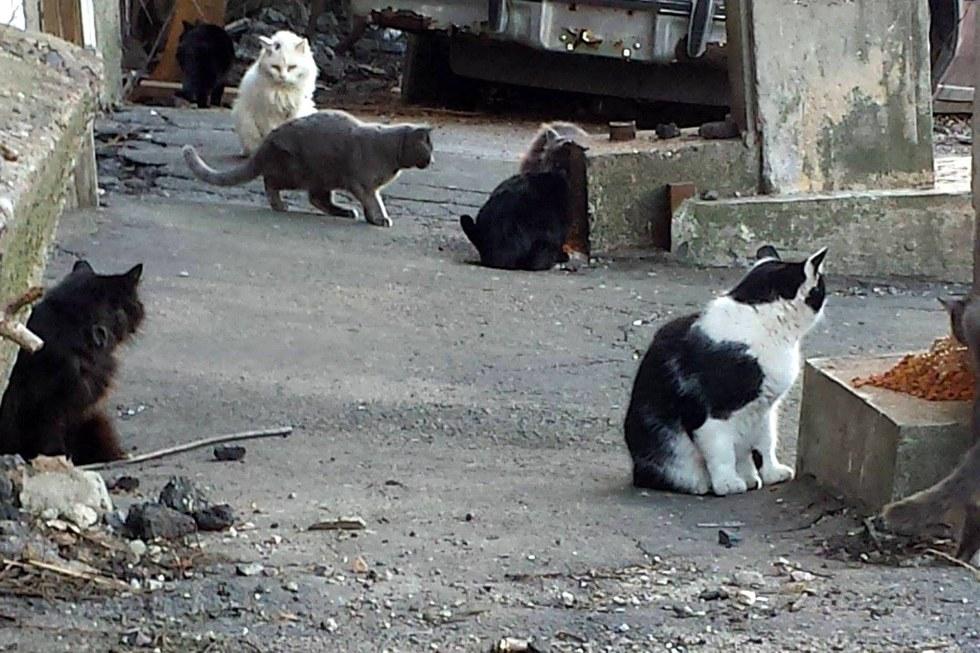 Stray cats in Boston
