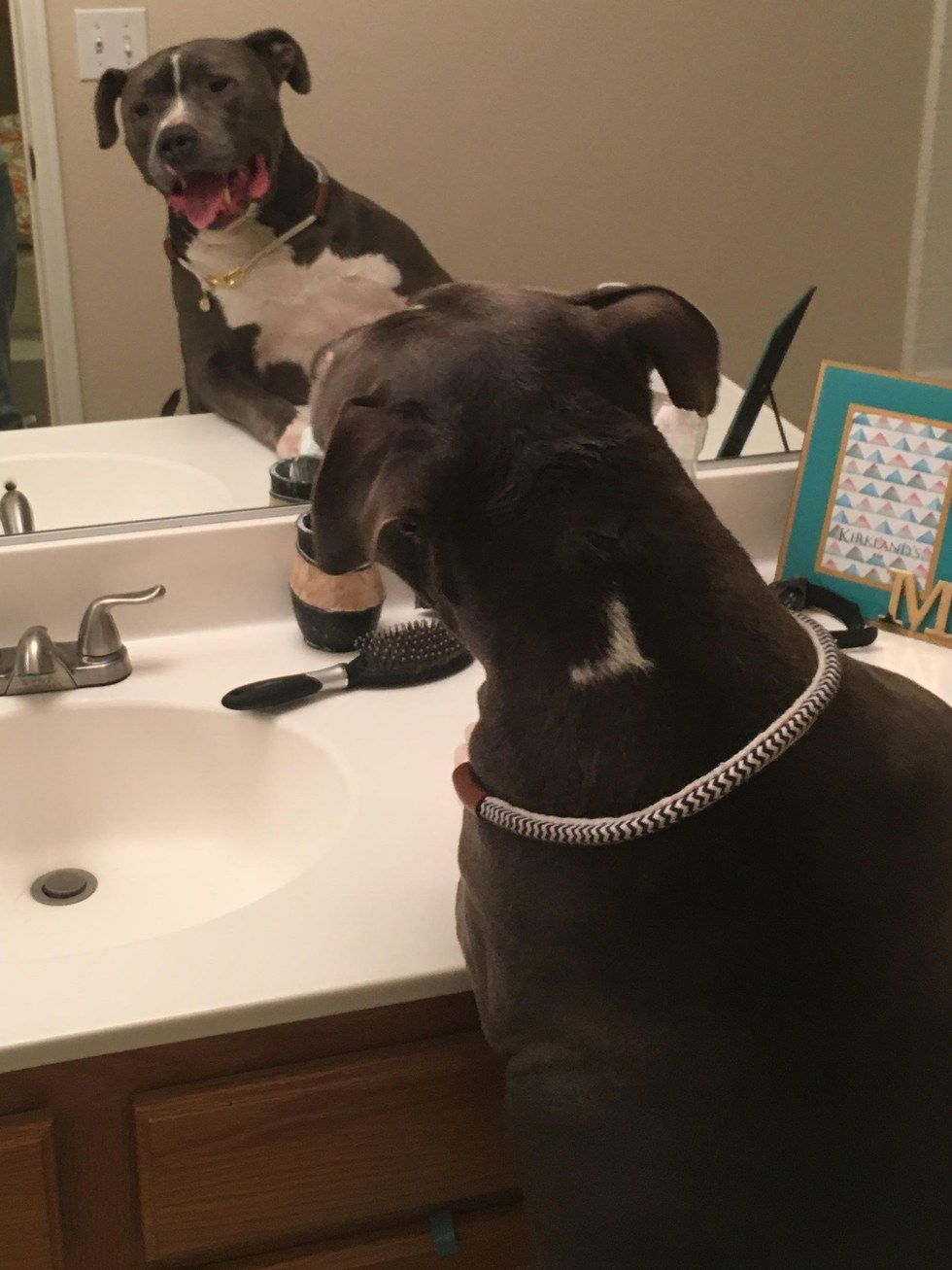 Blue King checking himself out in the mirror