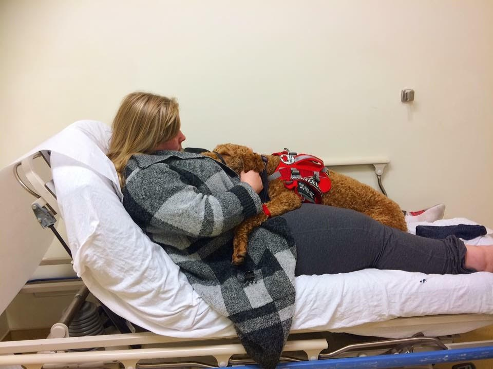 service dog laying on woman at hospital