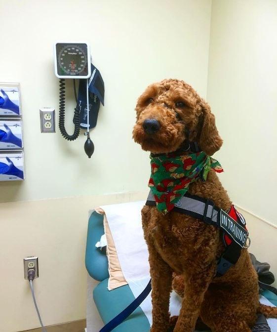 service dog on hospital bed