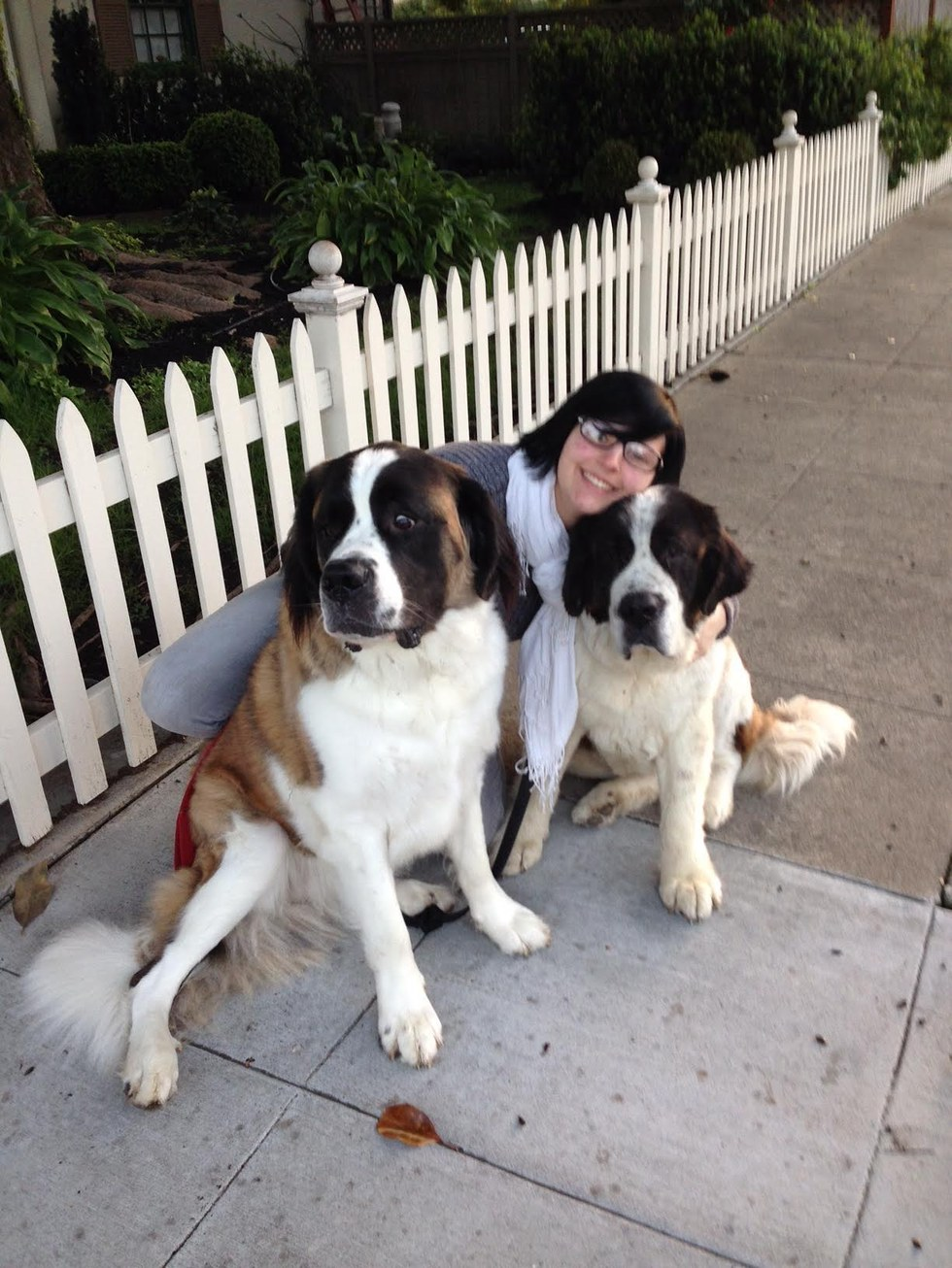 St. Bernard dog and her new family in the United States