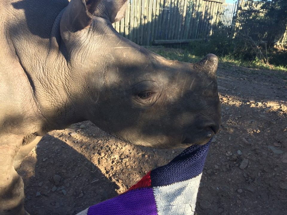 One of the rhinos at Thula Thula Orphanage