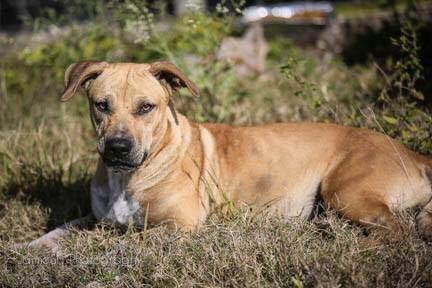 """Harper, a dog living in Redland Florida, or """"The Redlands."""""""