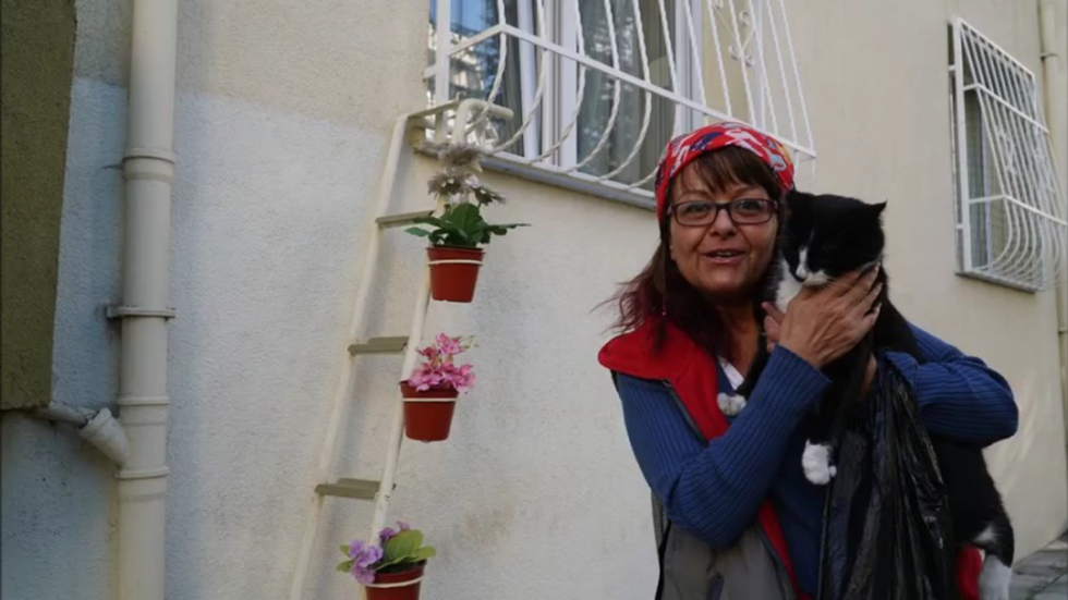 Woman Builds 'Cat Ladder' So Strays Can Come In From The Cold