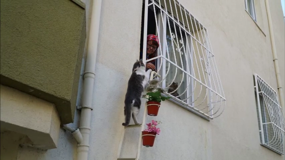 Turkish Woman Builds Cat Ladder