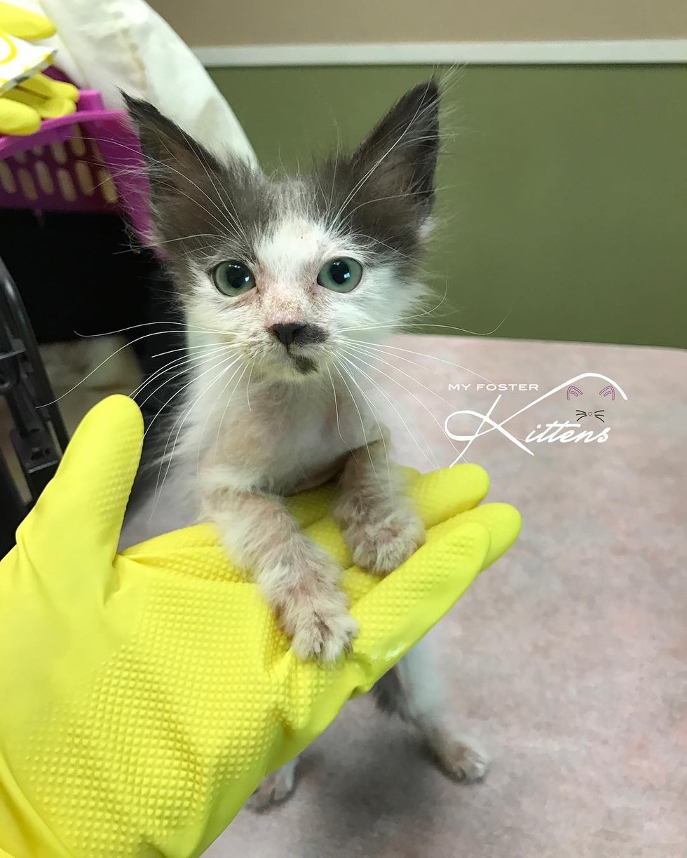 Watch How to Get a Sick Kitten to Eat video