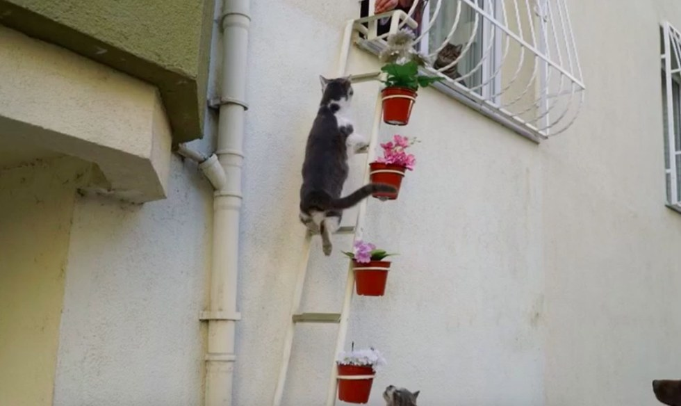 woman builds cat ladder for stray cats to enter her home. Black Bedroom Furniture Sets. Home Design Ideas