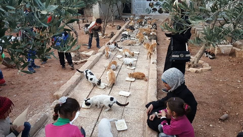 Aleppo cat sanctuary before bombing