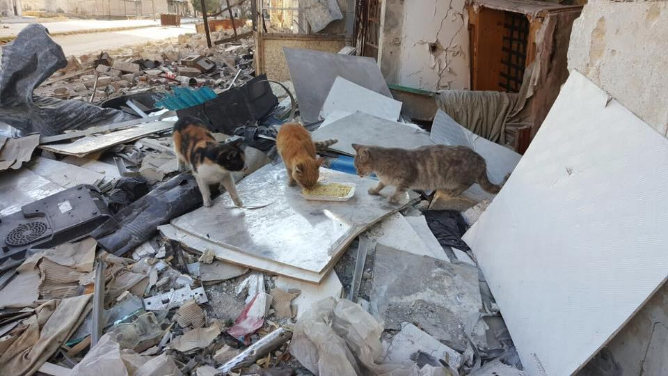 Cats eat food on ruins of Aleppo