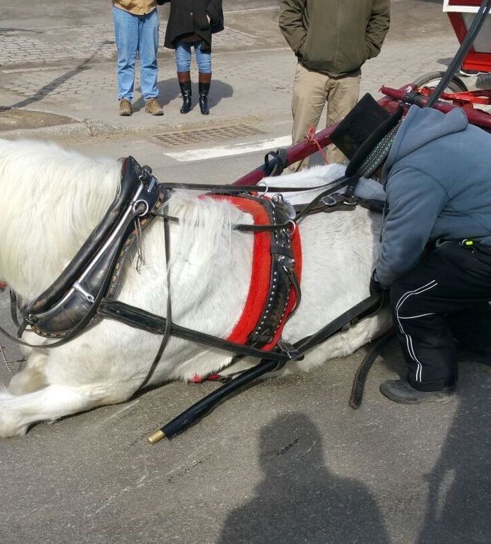 Carriage horse in New York City collapses