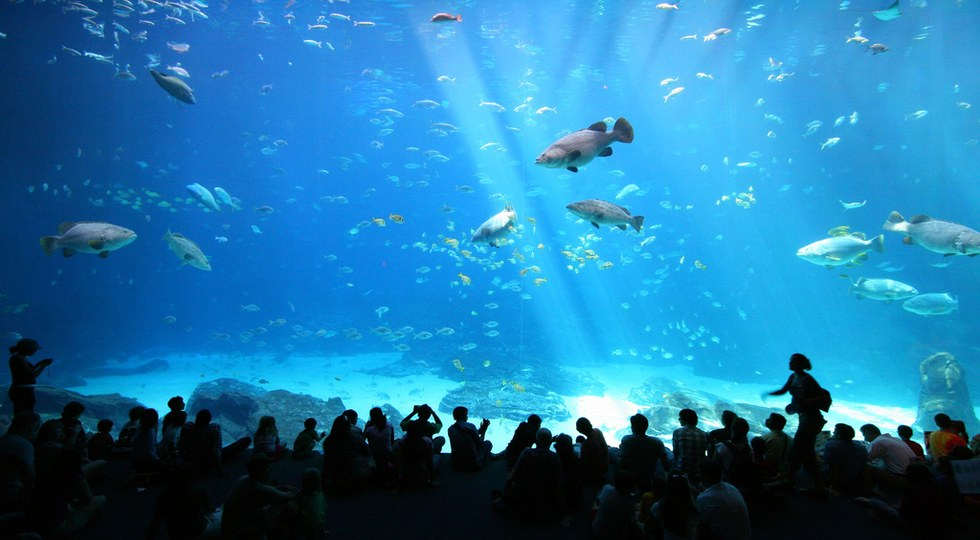 The Georgia Aquarium Is One Of Largest In United States Facility Spans 550 000 Square Feet And Includes An Award Winning Dolphin Exhibit