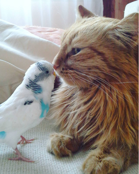 Cat and Parakeet Become Friends