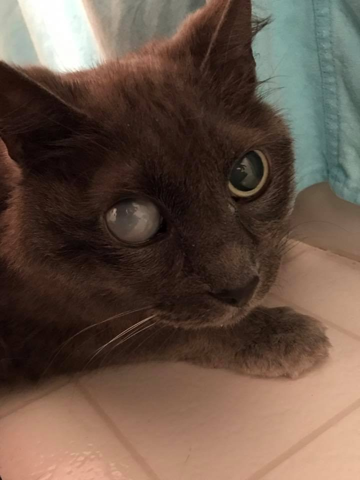 18 Year Old Cat Blind In One Eye Terrified In Shelter