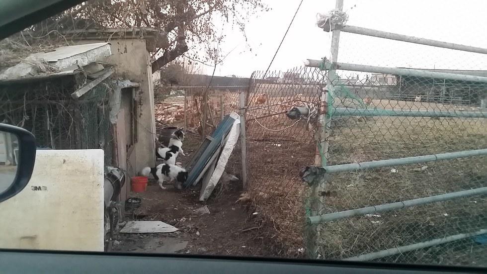 Dog meat farm in Korea