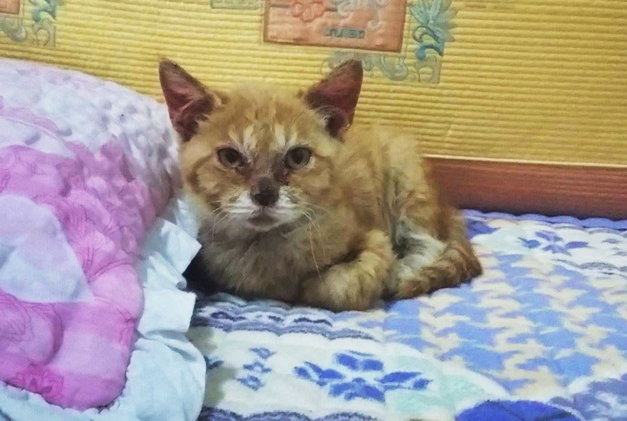 Cat rescued from dog meat farm in Korea