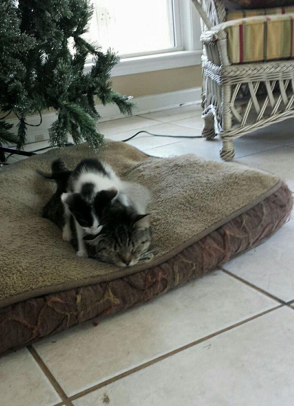 Cat Brings Home Kitten