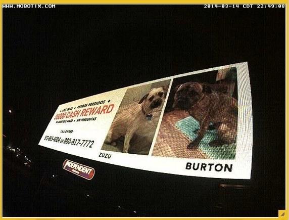 Billboard seeking return of dogs stolen in Hartford, CT