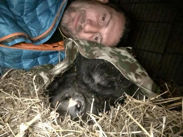 Rescued potbellied pig with her favorite person at Blind Spot Animal Sanctuary