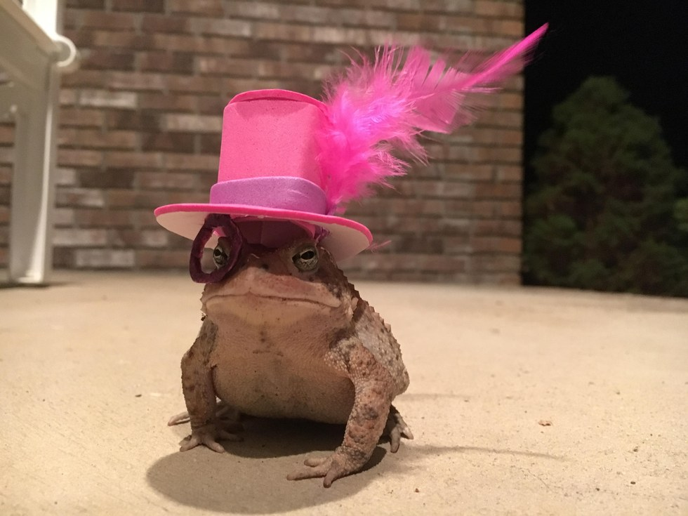 toad wears hats