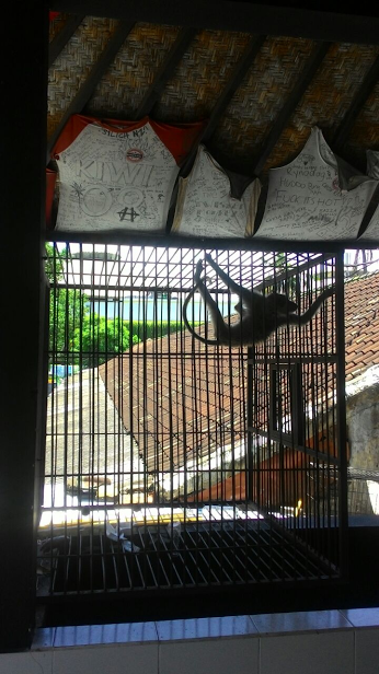 Caged monkey at the Twisted Monkey Bar in Bali, Indonesia