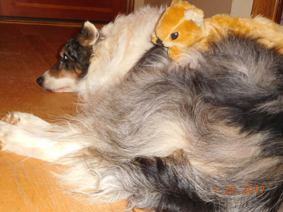 dog gets a squirrel toy