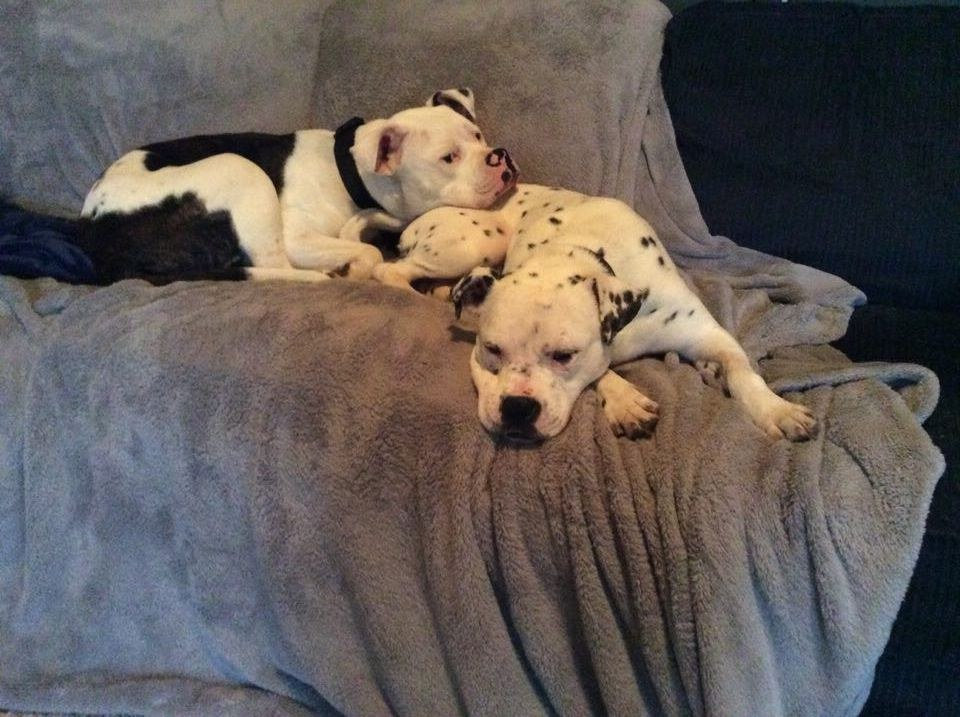 Rescue dogs Lola and Kingston snuggling together