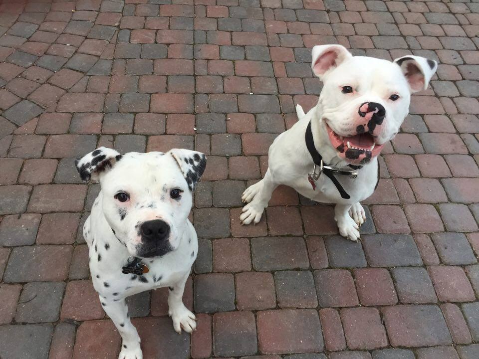 Rescue dogs Lola and Kingston are best friends