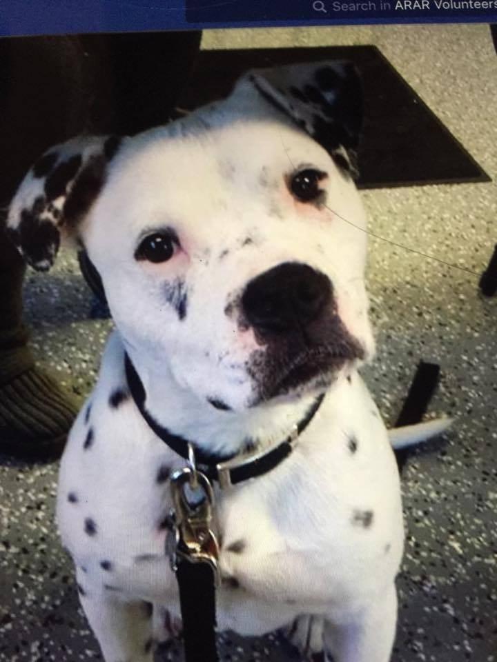 Kingston the rescue dog on his adoption day