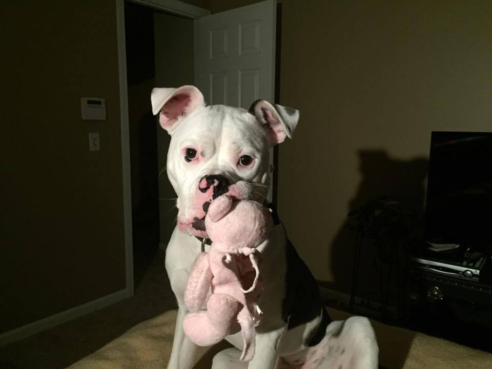 Lola the rescue dog is still looking for a home