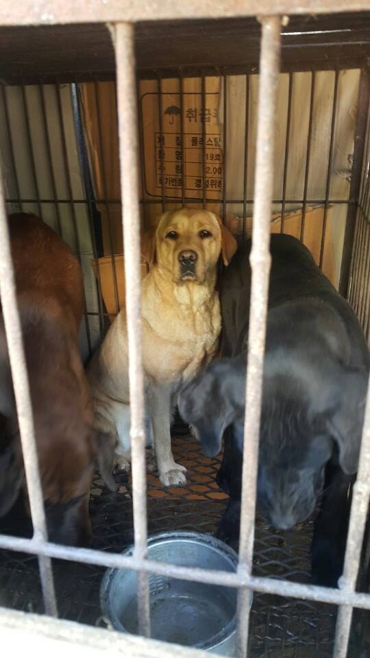 Dogs caged at a tonic shop in South Korea