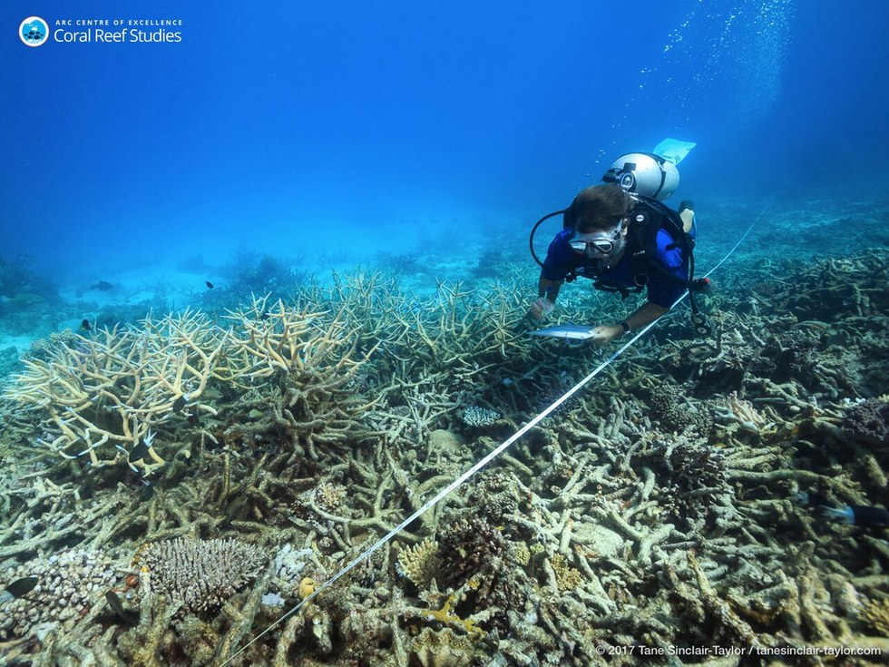 Bleached coral on the Great Barrier Reef in Australia