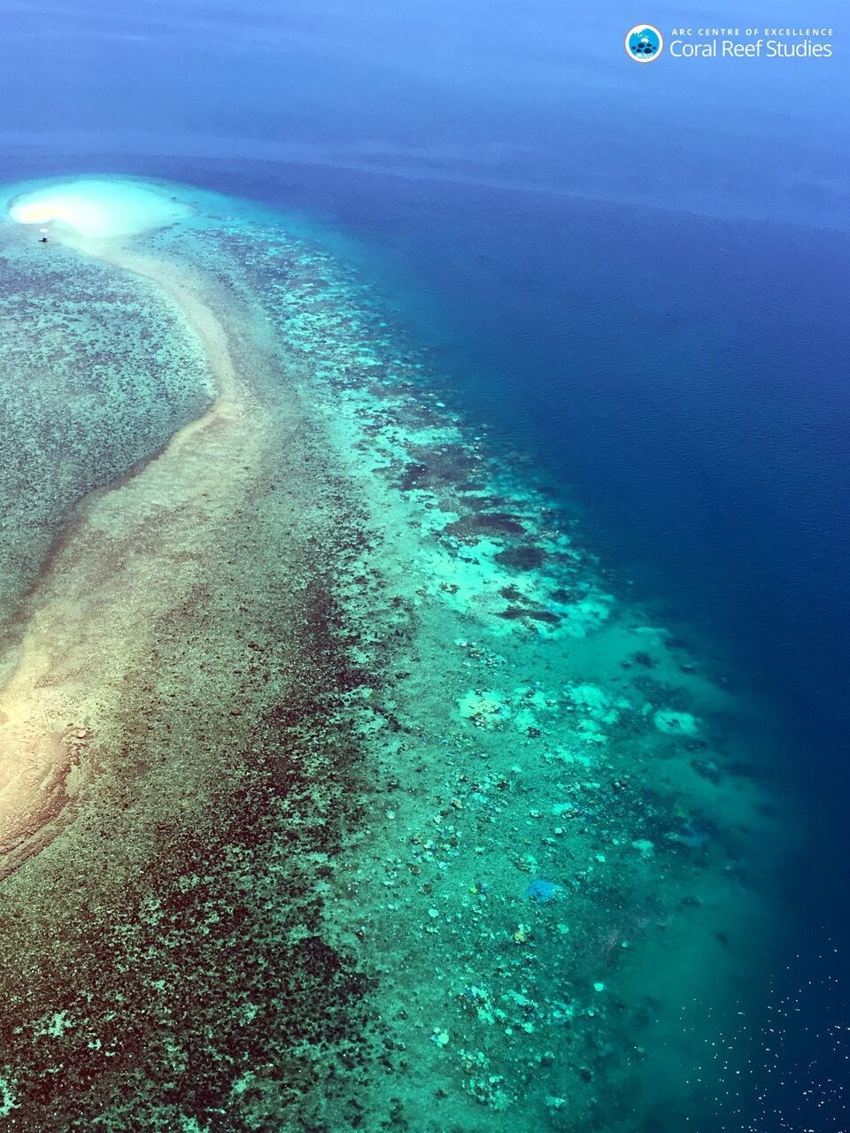 Aerial view of the bleached coral on the Great Barrier Reef