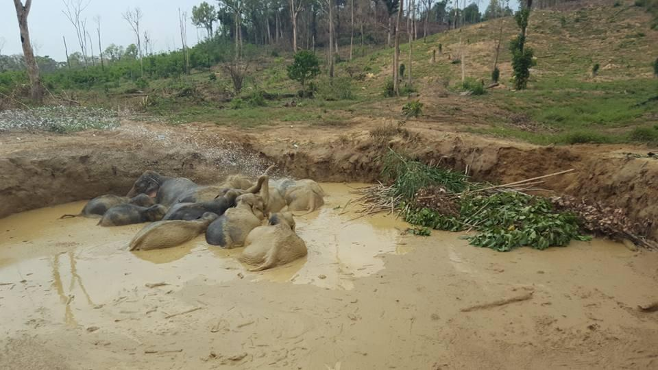 Elephant herd stuck in bomb crater in Cambodia begins to climb out