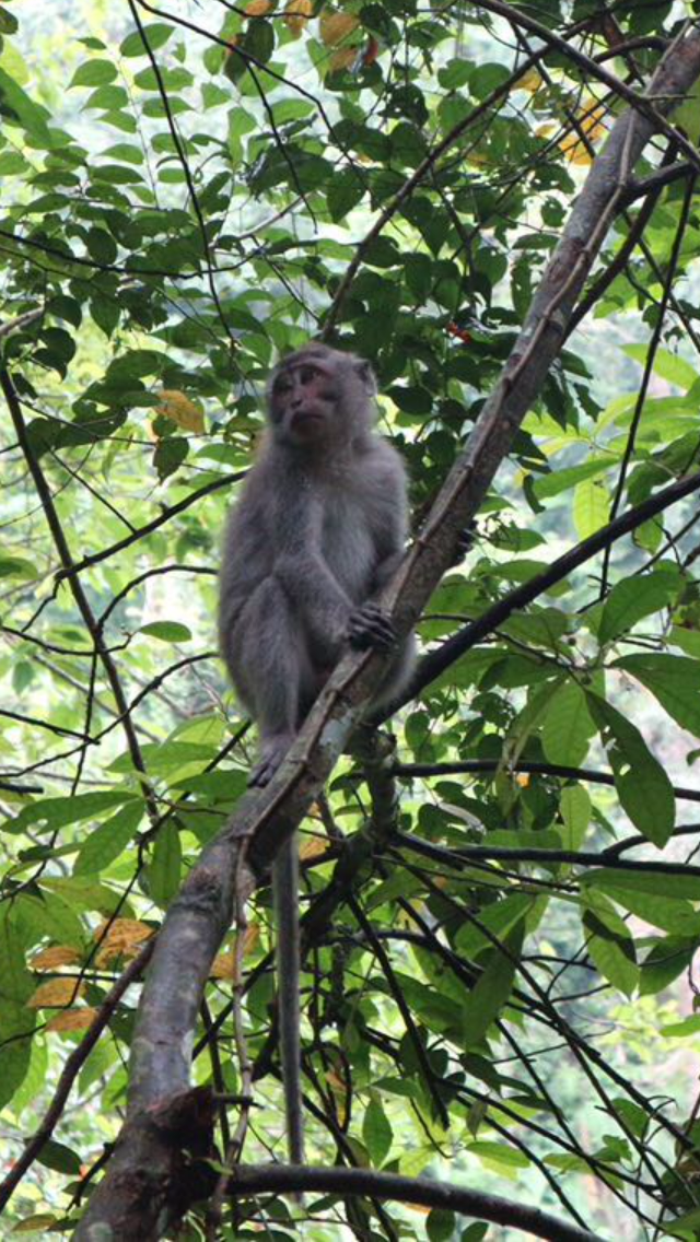 Monkey perched on a tree in Indonesia