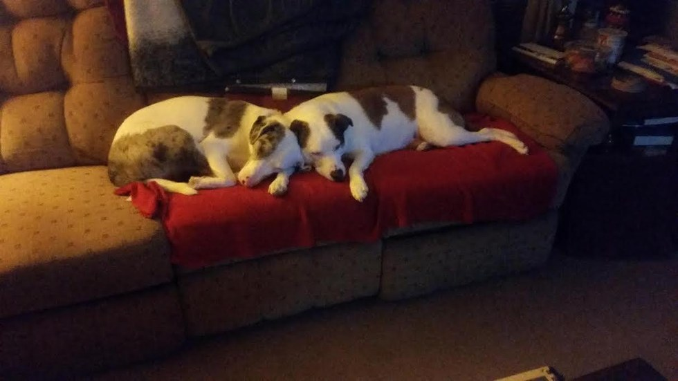 A blind dog and a seeing dog cuddling together