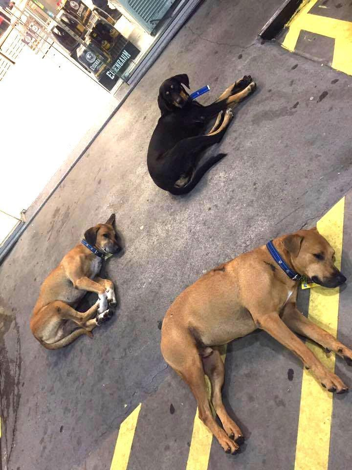 stray dogs land a job that keeps them all together