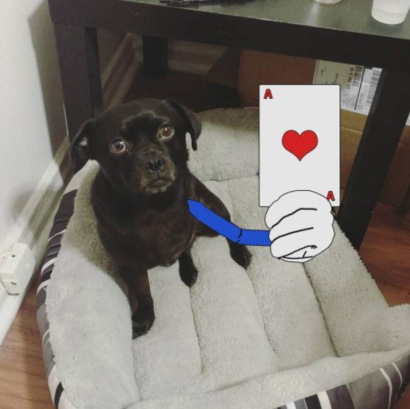 three-legged dog gets cartoon arm