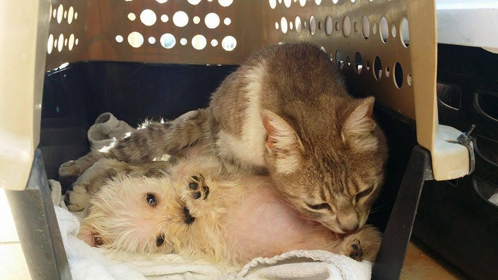 Street cat adopts orphaned puppy