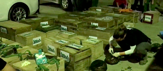 Seizure of 113 pangolins in Vietnam