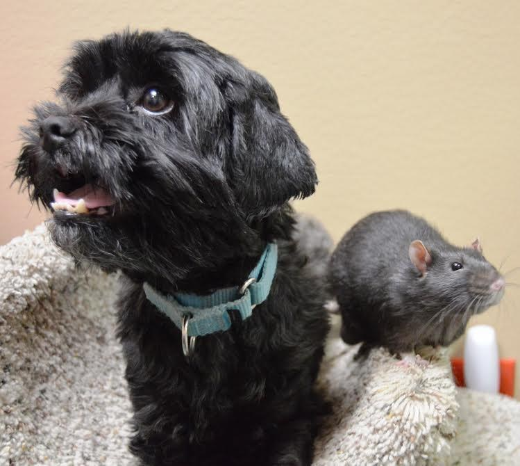 Dog and rat who are best friends